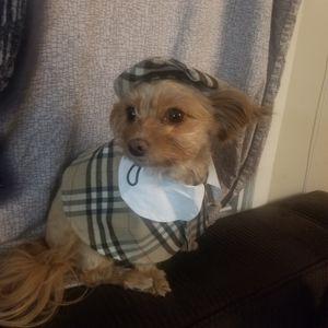 Fashion Dog Cape & Cap